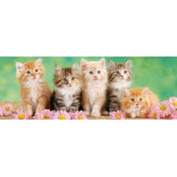 5 малки котета