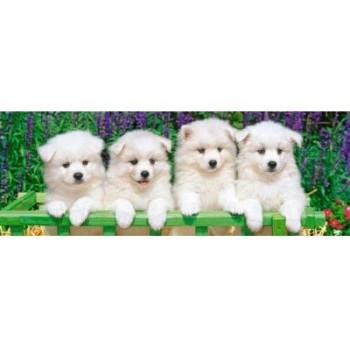 5 малки кученца