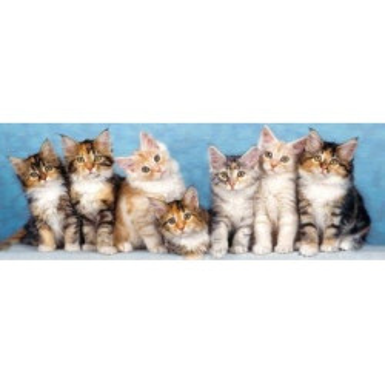 7 шарени котета